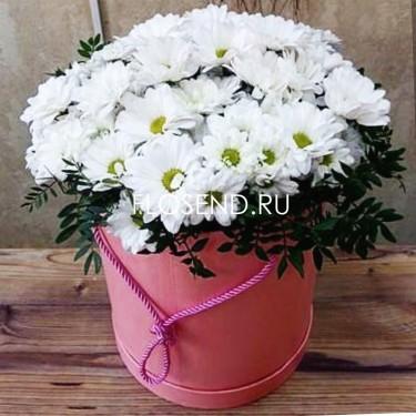 31 Хризантема белая в шляпной коробке